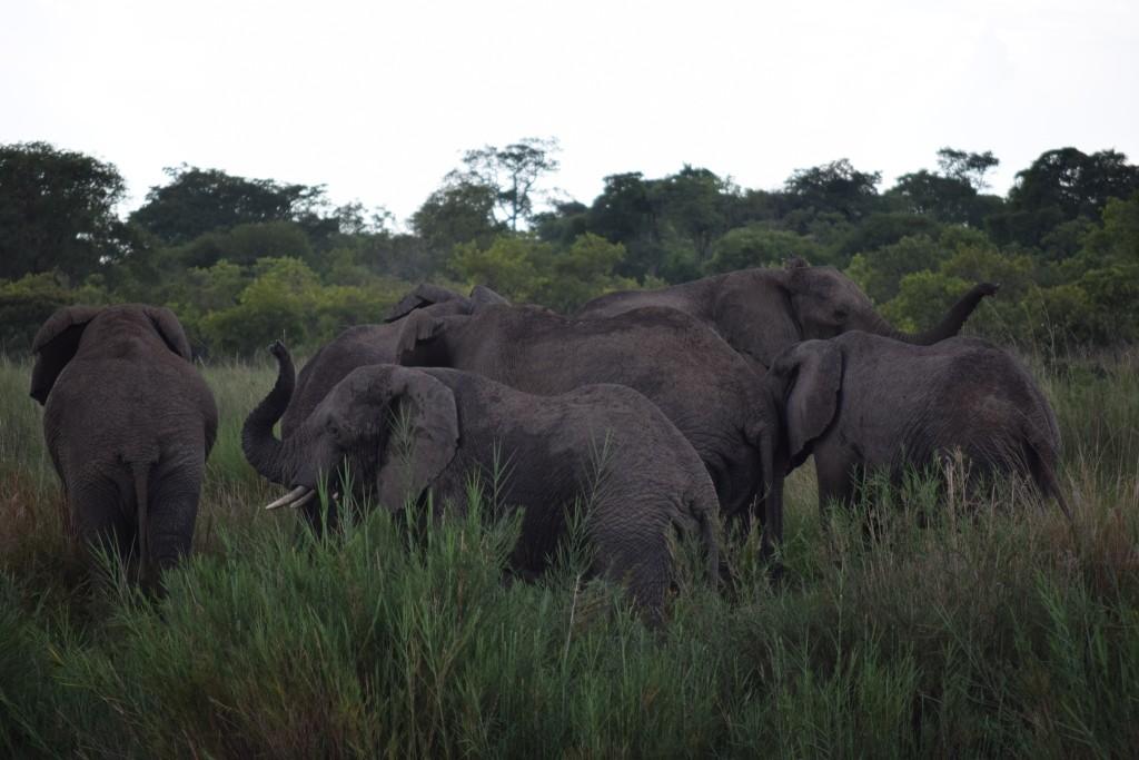 Elephants by Anna Toness (2), 28.12.15