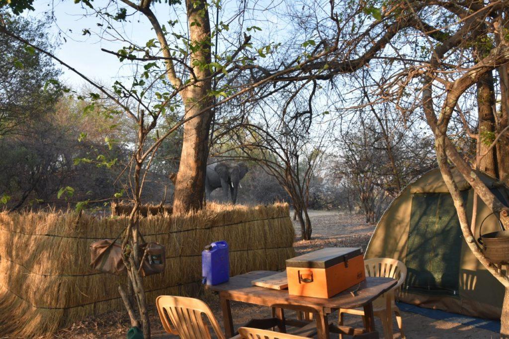 elephant-in-campsite