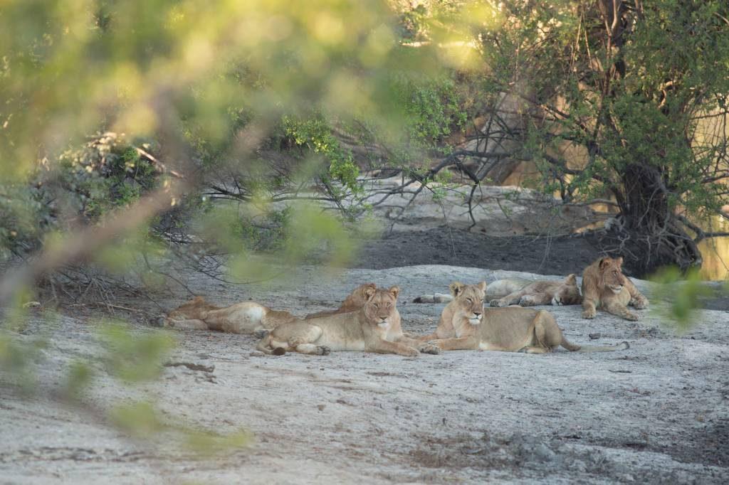 Lions 29062017