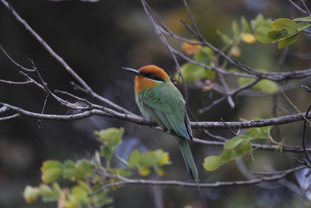 Bohms Bee-eater campsite