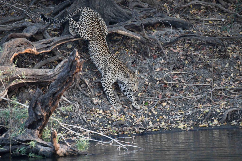 Leopard2_1897_small